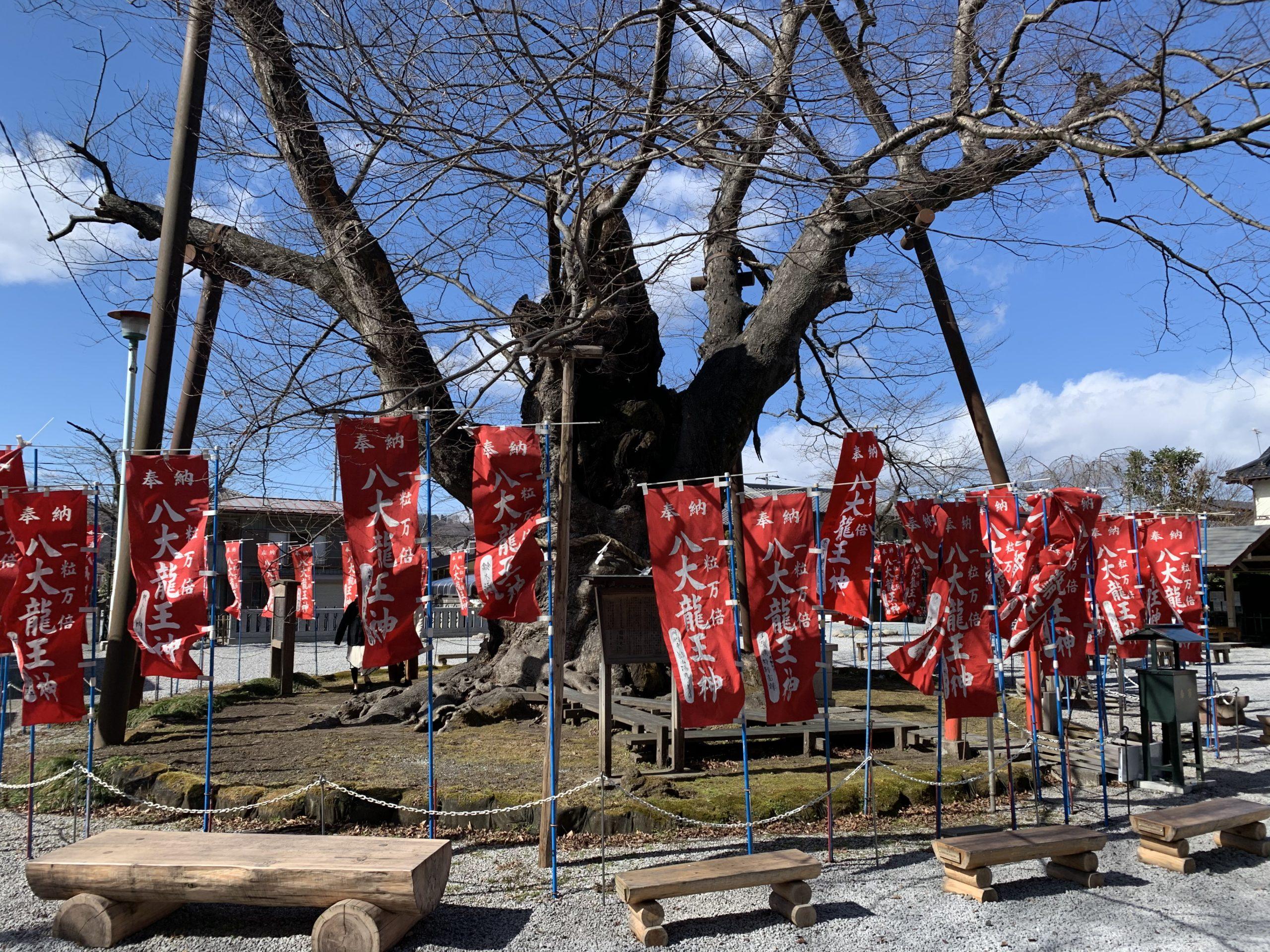 今宮神社ハートの木