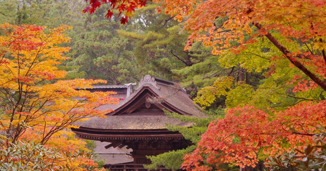 桜池院(ようちいん)
